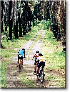 Mountain Biking through the Palm Forests